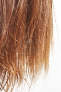6081537-closeup-of-chestnut-natural-hair-split-ends-isolated-on-white-with-selective-focus